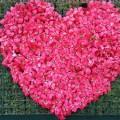 血液型 組み合わせ 恋愛